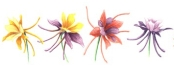 five-multi-colored-columbine-flowers-row-fl46
